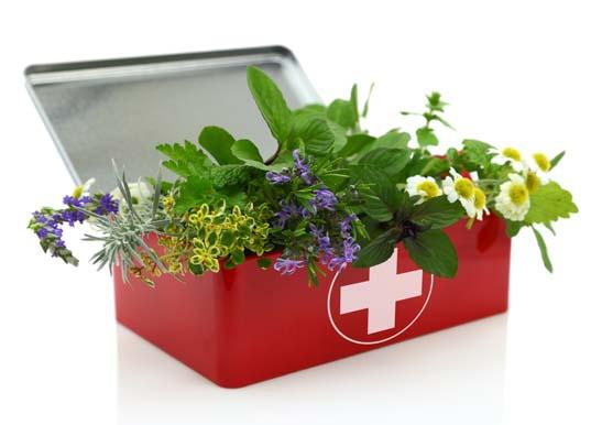 trousse plante pharmacie fleurs rouge